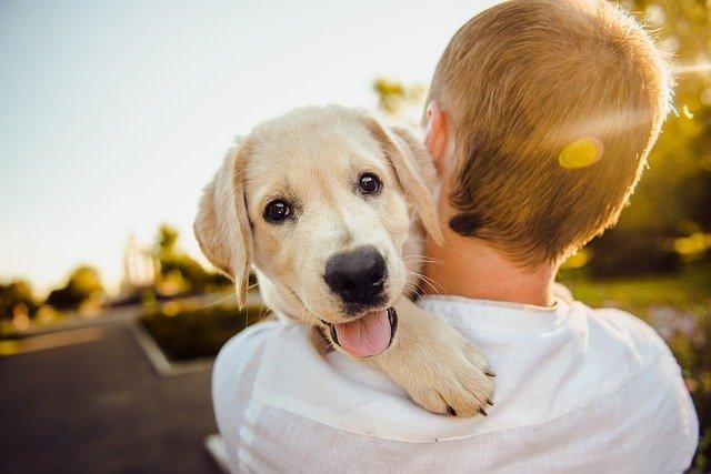 Ejer med sin hund